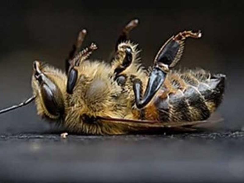 Αποτέλεσμα εικόνας για απωλειες μελισσιων